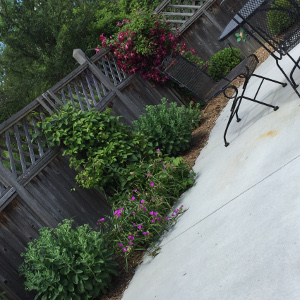 Landscaping shrubs and vines